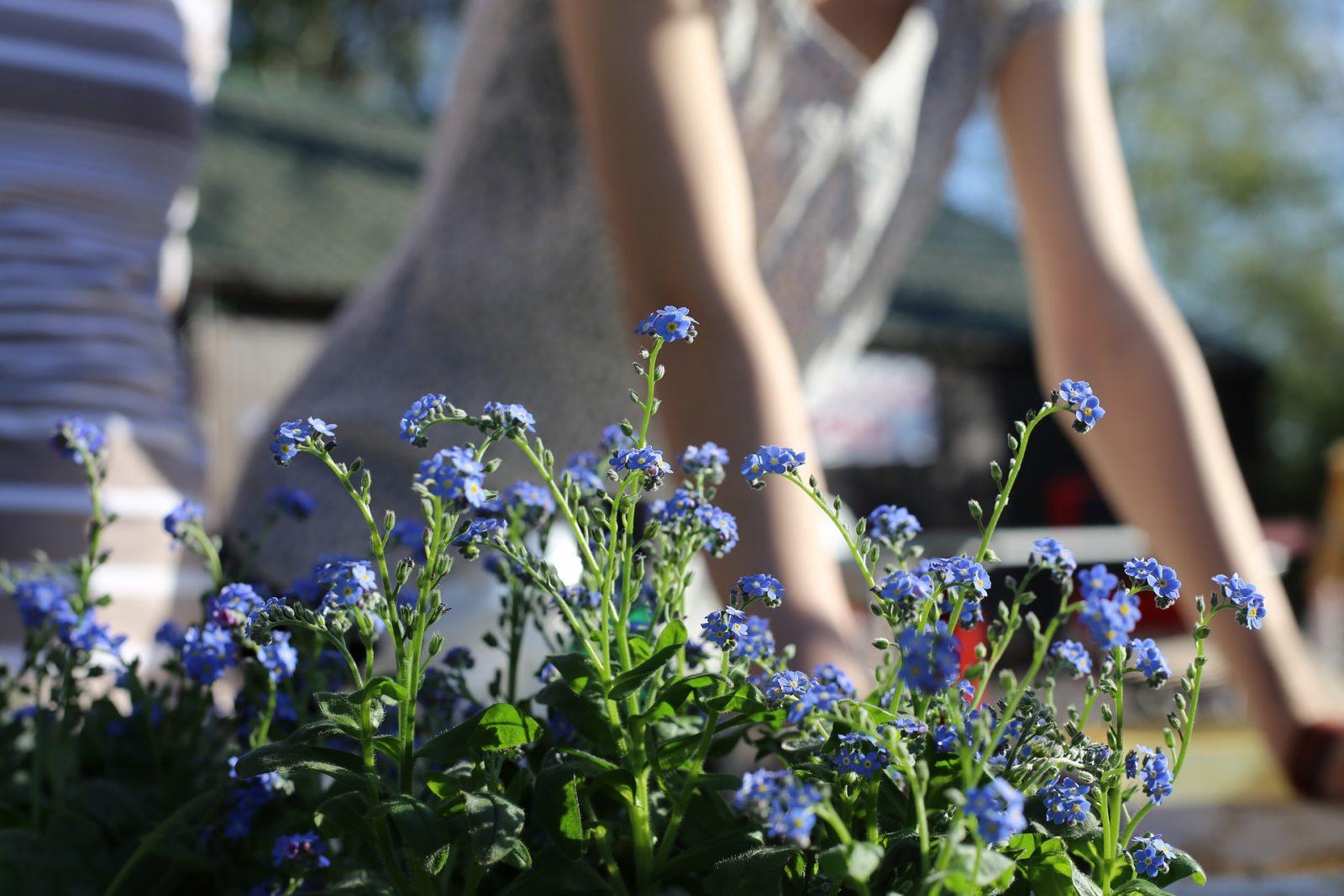 spring-garden-1219823_1920